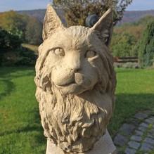 """Katze """"Maine Coon"""""""