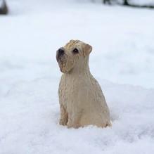 """Miniatur """"Wheaten Terrier"""""""